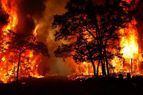 آتش سوزی جنگلی+عبارت