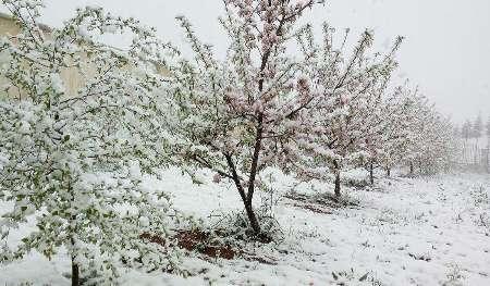برف فروردین+عبارت