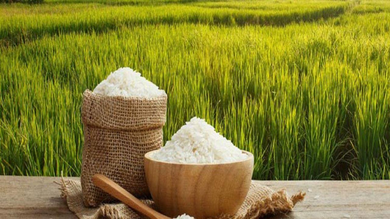 برنج+عبارت