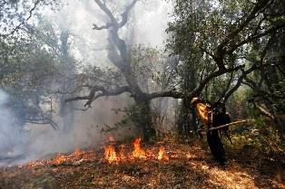 آتش سوزی جنگل + عبارت