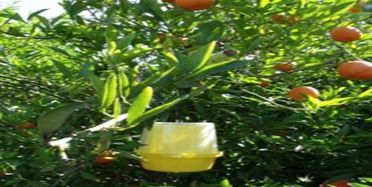 درخت+عبارت
