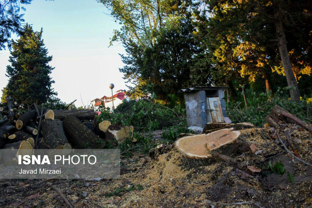 درخت قطع شده+عبارت