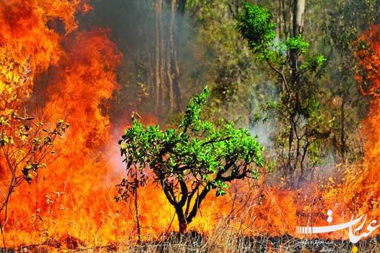 آتشسوزی جنگل+عبارت