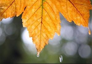 هواشناسی باران پاییز + عبارت