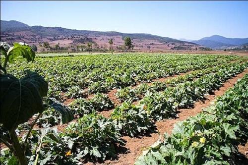 کشاورزی + عبارت
