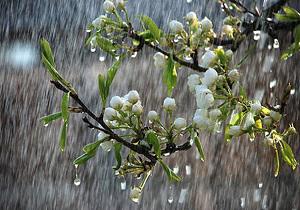 هواشناسی بارش باران + عبارت