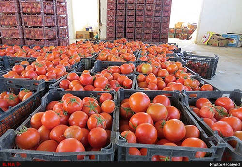 گوجه فرنگی+عبارت