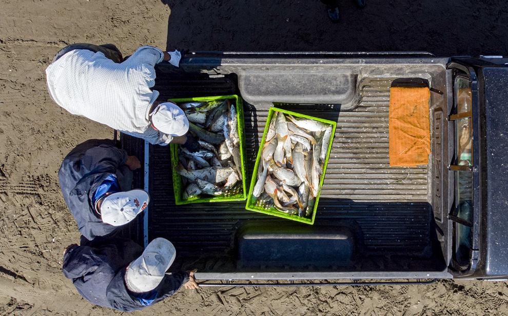 صید ماهی+عبارت