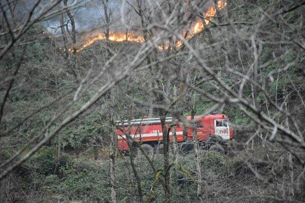 آتش سوزی در جنگل+عبارت