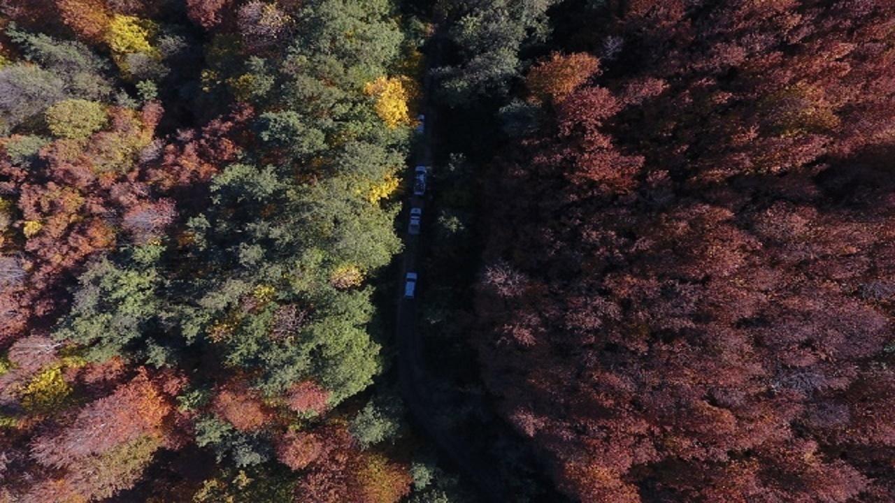 جنگل+عبارت