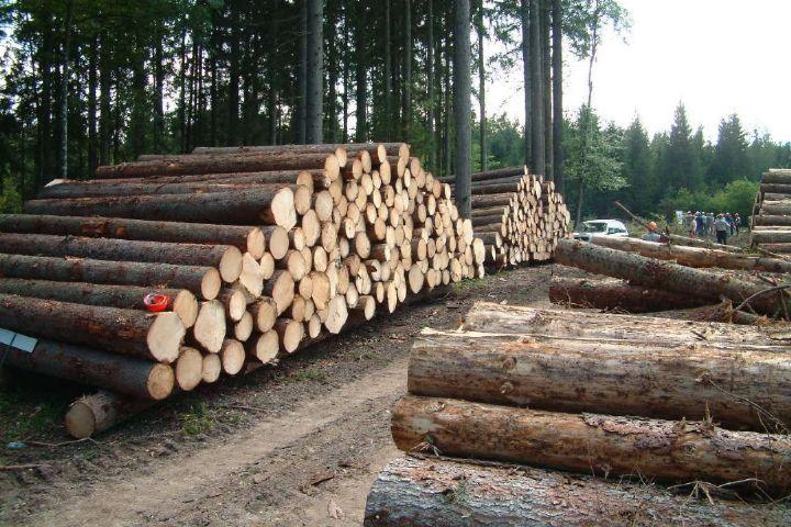 چوب+عبارت