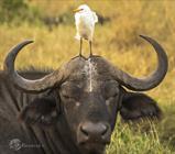 عکس های کمدی از دنیای حیوانات