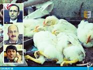 شیوع آنفولانزای فوق حاد پرندگان در مازندران