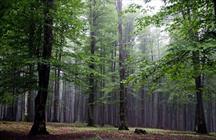 جنگل های هیرکانی  + عبارت