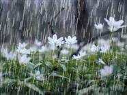 بارانی هواشناسی  + عبارت