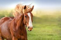 اسب + عبارت