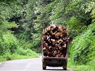 قاچاق چوب+عبارت