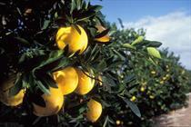 لیمو+عبارت