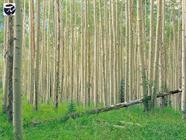 زراعت چوب+عبارت