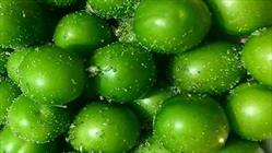 گوجه سبز+عبارت