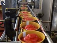 کارخانه رب گوجه + عبارت