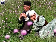 سالمند + پیری + عبارت