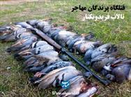 قتل پرندگان مهاجر در فریدونکنار+عبارت