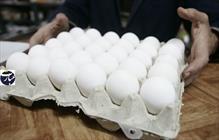 تخم مرغ+عبارت