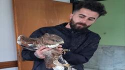 پرنده شکاری+عبارت