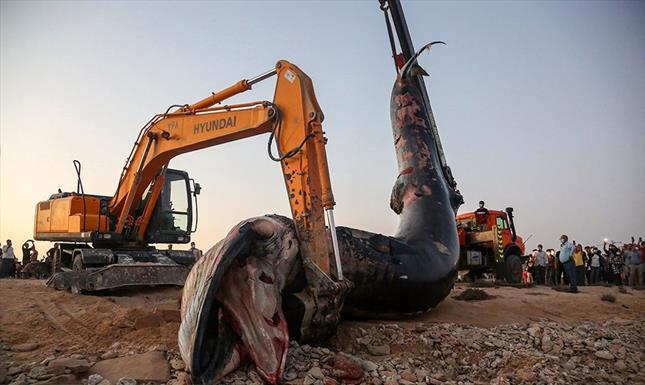 نهنگ در کیش+عبارت