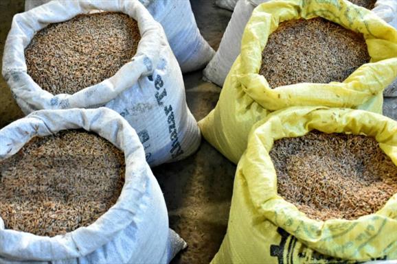 نشا کاری برنج+عبارت